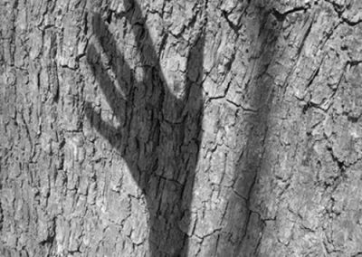 GaynorPerry_stories_in_the_tree